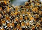 Rahasia lebah Dalam Al-Quran